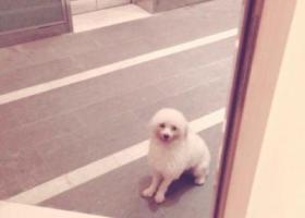 珠海十四村附近我的狗狗丢了