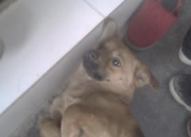 寻狗启示,景德镇昌河走丢 名叫小黑,它是一只非常可爱的宠物狗狗,希望它早日回家,不要变成流浪狗。