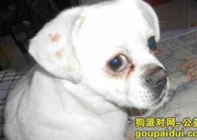 寻狗启示,狗丢了,希望嘉峪关的好心人看到了可以联系我,它是一只非常可爱的宠物狗狗,希望它早日回家,不要变成流浪狗。