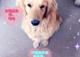 寻狗启示,内蒙古鄂尔多斯亿阳里面丢失金色的金毛在亿阳里被人叫走腿上有防锈漆,它是一只非常可爱的宠物狗狗,希望它早日回家,不要变成流浪狗。