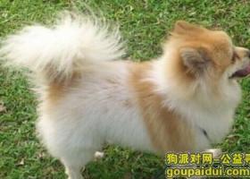 寻狗启示,珠海翠微路口走失一只毛绒绒的小型狗,它是一只非常可爱的宠物狗狗,希望它早日回家,不要变成流浪狗。