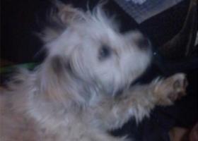 寻狗启示,湖北十堰市六堰万豪国际附近丢失白色杂交狗,它是一只非常可爱的宠物狗狗,希望它早日回家,不要变成流浪狗。