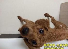 寻狗启示,寻狗(miki)启示,它是一只非常可爱的宠物狗狗,希望它早日回家,不要变成流浪狗。
