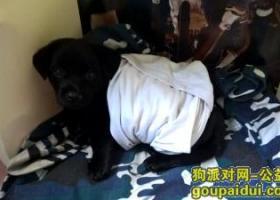 寻狗启示,日盛中央华府,2015.7.18晚9点30走失40cm拉布拉多,它是一只非常可爱的宠物狗狗,希望它早日回家,不要变成流浪狗。
