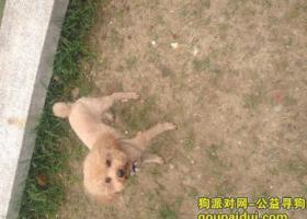 寻狗启示,求帮忙找狗狗:重金酬谢,它是一只非常可爱的宠物狗狗,希望它早日回家,不要变成流浪狗。