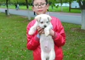 找一只白色的可爱小狗狗
