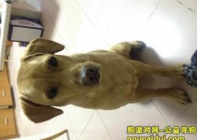 东莞請問你有見過他嗎,这是我家爱犬