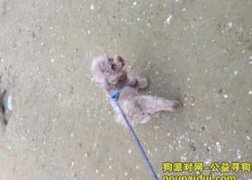 寻狗启示,请大家帮忙寻找爱犬或者帮忙转发!非常感谢!!,它是一只非常可爱的宠物狗狗,希望它早日回家,不要变成流浪狗。