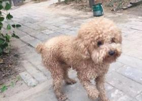 寻狗启示,心爱的狗狗丢失了,请大家帮帮忙 谢谢!,它是一只非常可爱的宠物狗狗,希望它早日回家,不要变成流浪狗。