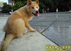 我的狗狗于8月3日在贵阳云岩广场走丢