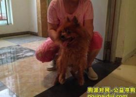 石家庄长安区乐城半岛小区2015年7月31号捡到一条狐狸犬 望失主速来认领