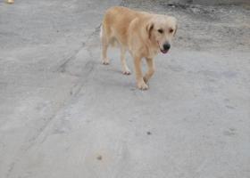 寻狗启示,狗狗正面照…………………………,它是一只非常可爱的宠物狗狗,希望它早日回家,不要变成流浪狗。