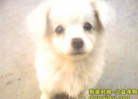寻狗启示,LUCKY 我想他了,它是一只非常可爱的宠物狗狗,希望它早日回家,不要变成流浪狗。