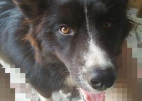 寻狗启示,于2015年8月17日早晨在嫩江二马路附近走失,它是一只非常可爱的宠物狗狗,希望它早日回家,不要变成流浪狗。