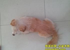 寻狗启示,浙江义乌寻找臭臭,一岁大,毛色黄白,小型犬。,它是一只非常可爱的宠物狗狗,希望它早日回家,不要变成流浪狗。