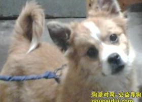 北京寻找蝴蝶串子母狗