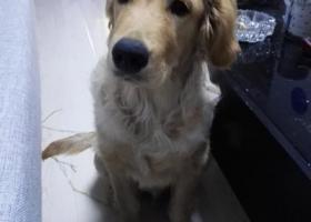 望大家帮忙找下爱犬,谢谢大家