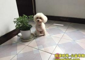 寻狗启示,扬州江都区重金白色小狗走失,它是一只非常可爱的宠物狗狗,希望它早日回家,不要变成流浪狗。