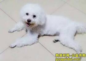 潍坊永安路附近求助寻狗