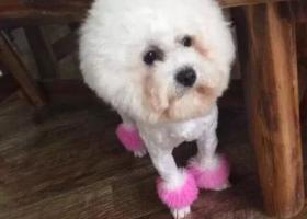 寻狗启示,狗狗在山东临沂蓝田步行街丢失,找到重金酬谢!!联系:15864893883,它是一只非常可爱的宠物狗狗,希望它早日回家,不要变成流浪狗。