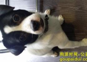 寻狗启示,寻狗绍兴,望好心人告知 18758875461,它是一只非常可爱的宠物狗狗,希望它早日回家,不要变成流浪狗。