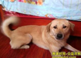 寻狗启示,狗狗不见了请帮忙找下谢谢,它是一只非常可爱的宠物狗狗,希望它早日回家,不要变成流浪狗。
