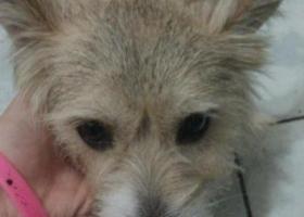 北京市丰台区东大街、七里庄附近捡到狗