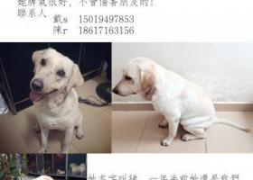 急寻爱犬 24日于茶光村走失