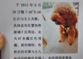 成都龙泉驿区寻狗。童童