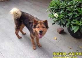 地区广东东莞寮步下栏基 1500元请你们帮我找狗。