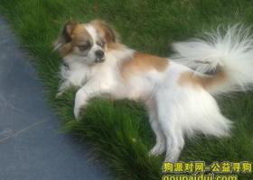 重庆北碚蔡家两江名居丢了爱狗蛋蛋 等你回家!