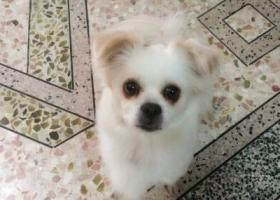 寻狗启示,小狗外出跟丢,天冷,盼它回家,它是一只非常可爱的宠物狗狗,希望它早日回家,不要变成流浪狗。