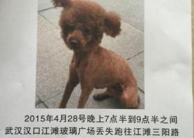武汉汉口江滩 三阳路玻璃广场方向丢失,找到重谢5000电话 15827333553