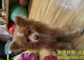武昌雄楚大街图书城附近捡到一只小黄狗