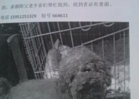 寻狗启示,连云港开发区朝阳镇和友超市附近走丢一只小泰迪,它是一只非常可爱的宠物狗狗,希望它早日回家,不要变成流浪狗。