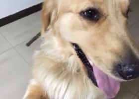 车牌号京E W6305的车主顺走了我家的小狗-经热心网友帮助狗狗已找到,谢谢大家!