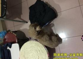 成都成华区双桥路捡到一只狗狗,弟弟咖色。主人联系我微信qq_675985825