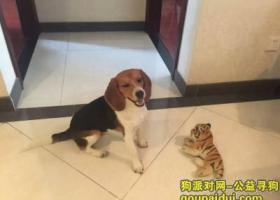 急急急!北京寻狗,帮帮忙,联系电话:15010515231