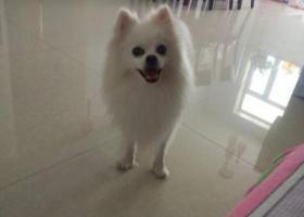新疆伊犁伊宁市五千元寻爱犬