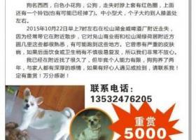 东莞5000元寻蝴蝶串