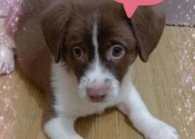 寻狗启示,广东省茂名高州寻串串一个,它是一只非常可爱的宠物狗狗,希望它早日回家,不要变成流浪狗。