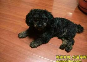 寻狗启示,寻狗黑色小狗,它是一只非常可爱的宠物狗狗,希望它早日回家,不要变成流浪狗。
