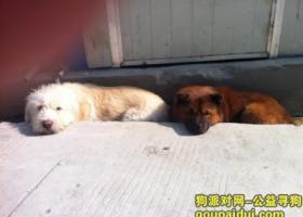 寻狗启示,3000元寻找在十堰二桥城邦华夏公馆丢失白色长毛丝丝狗,它是一只非常可爱的宠物狗狗,希望它早日回家,不要变成流浪狗。