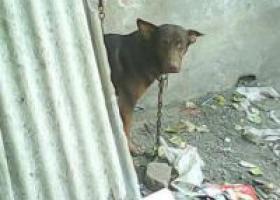 寻狗启示,在临沂市罗庄区沂堂镇荆山村丢失!,它是一只非常可爱的宠物狗狗,希望它早日回家,不要变成流浪狗。