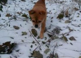 寻狗启示,寻,它是一只非常可爱的宠物狗狗,希望它早日回家,不要变成流浪狗。