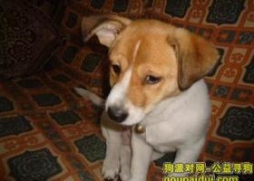 寻狗启示,寻找 皮皮 狗启示 000000000,它是一只非常可爱的宠物狗狗,希望它早日回家,不要变成流浪狗。