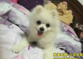 寻狗启示,浙江龙游2015年12月27日,球球快回家,它是一只非常可爱的宠物狗狗,希望它早日回家,不要变成流浪狗。