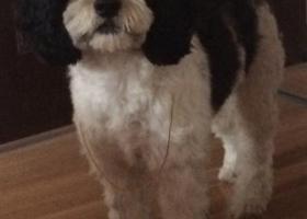 寻狗启示,五千元寻狗 安徽蚌埠,它是一只非常可爱的宠物狗狗,希望它早日回家,不要变成流浪狗。