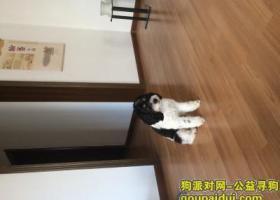 寻狗启示,愿出五千元寻狗 安徽蚌埠,它是一只非常可爱的宠物狗狗,希望它早日回家,不要变成流浪狗。