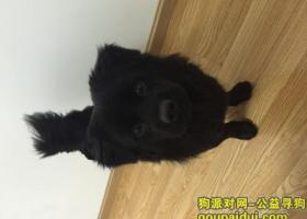 四川阆中捡到黑色狗狗
